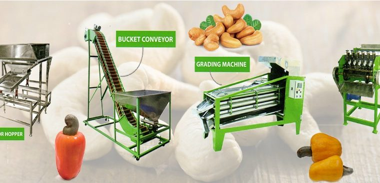 Cashew Processing and Cutting Machines in Gujarat