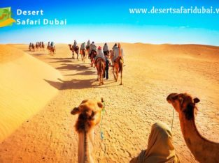Book Evening Desert Safari & Morning Desert Safari